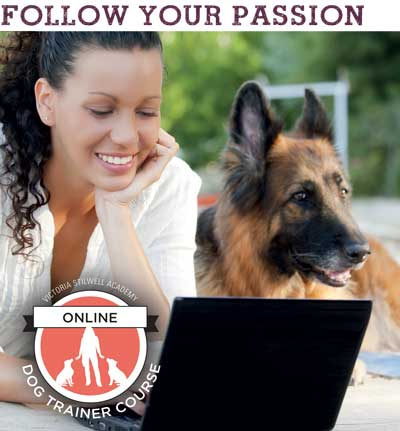 become a dog trainer from home
