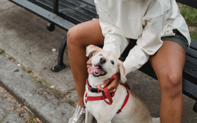 How Much Do Dog Trainers Make (And Ways To Keep Income Growing)