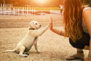 teaching a dog cue or command
