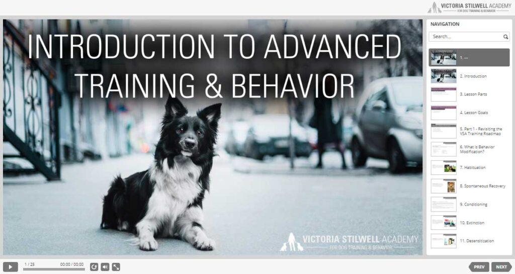 intro to dog training dashboard