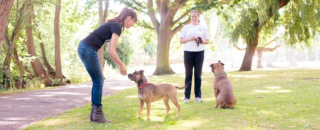 dog trainers working with a dog