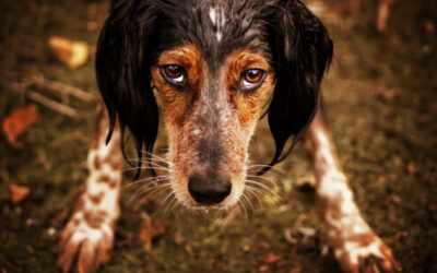 Five Dog Behavior Myths Your Clients Need Debunked