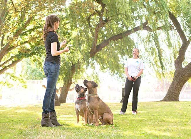 victoria training dogs